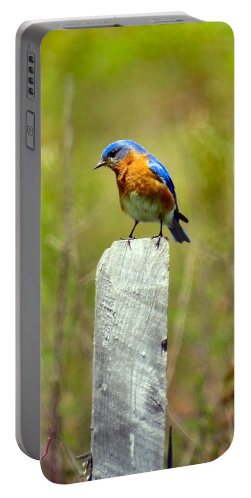 Eastern Portable Battery Charger featuring the photograph Eastern Bluebird Pose by Art Dingo