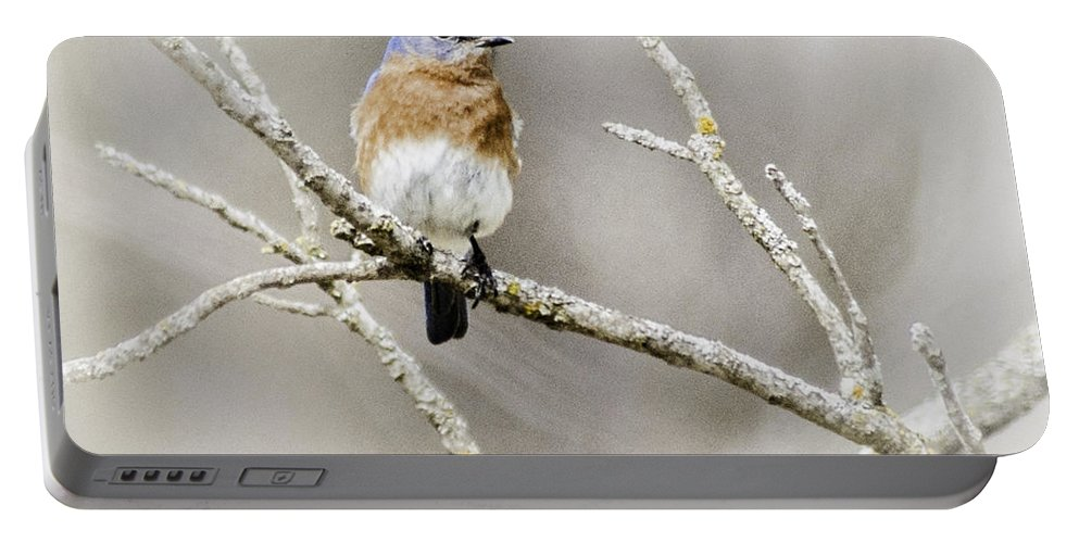 Eastern Bluebird Portable Battery Charger featuring the photograph Eastern Bluebird by Ronald Grogan