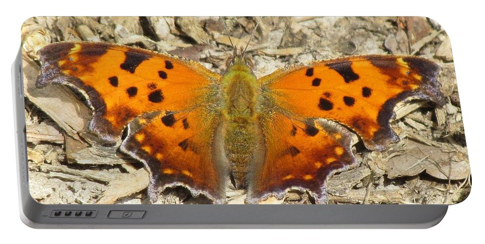 Eastern Comma(polygania Interrogationis) Portable Battery Charger featuring the photograph Eastern Comma by Eric Noa