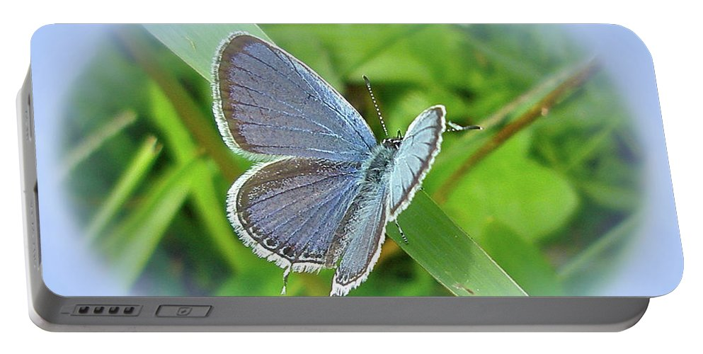 Butterfly Portable Battery Charger featuring the photograph Eastern-tailed Blue Butterfly - Cupido Comyntas by Mother Nature