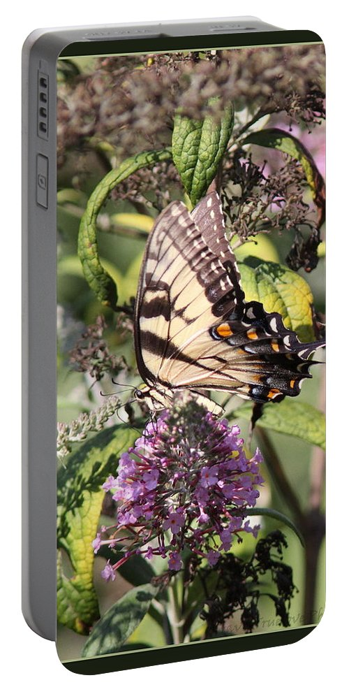 Eastern Tiger Swallowtail Portable Battery Charger featuring the photograph Eastern Tiger Swallowtail - Butterfly by Travis Truelove