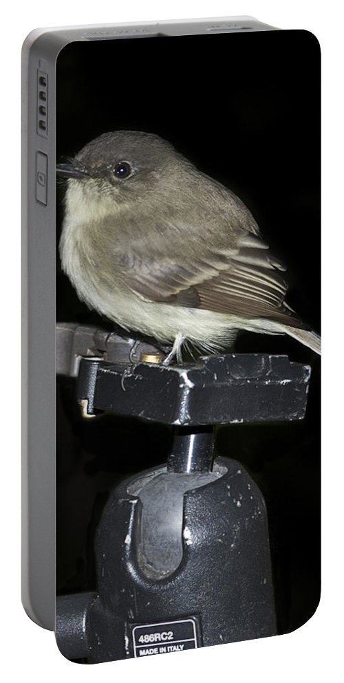 Wildlife Portable Battery Charger featuring the photograph Eastern Wood Peewee On Tripod by Michael Peychich