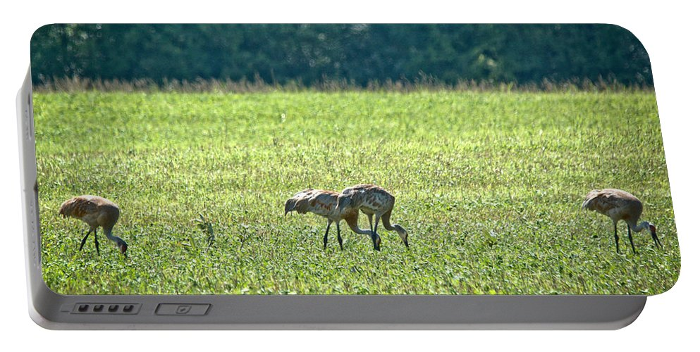 Sandhill Cranes Portable Battery Charger featuring the photograph Eating Cranes by Cheryl Baxter