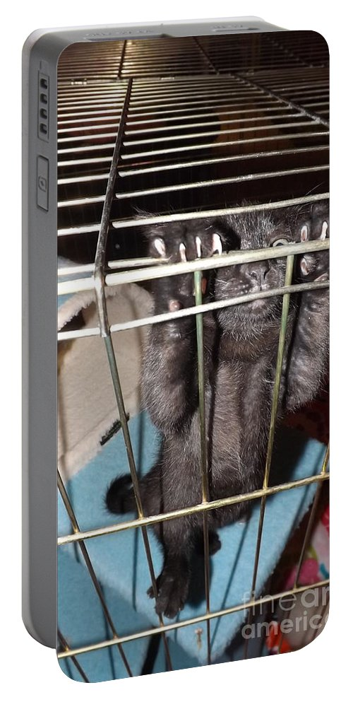 Kitten Portable Battery Charger featuring the photograph Ebony Hang In There by Jussta Jussta