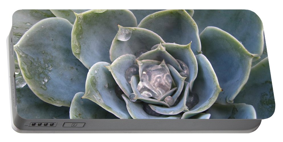 Abstract Portable Battery Charger featuring the photograph Echeveria With Water Drops by Amanda Mohler