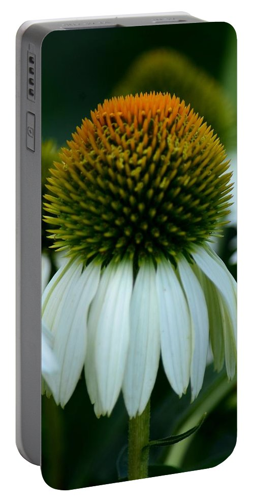 Echinacea Gold Ii Portable Battery Charger featuring the photograph Echinacea Gold II by Maria Urso