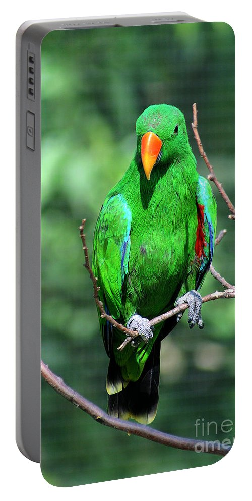 Bird Portable Battery Charger featuring the photograph Eclectus Parrot-1 by Gary Gingrich Galleries