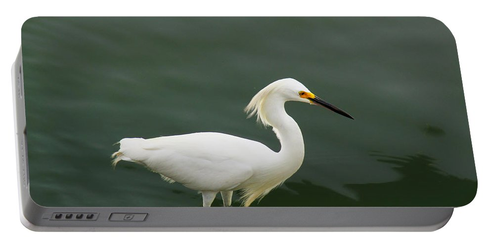 Egret Portable Battery Charger featuring the photograph Egret In Water by Robert Brown