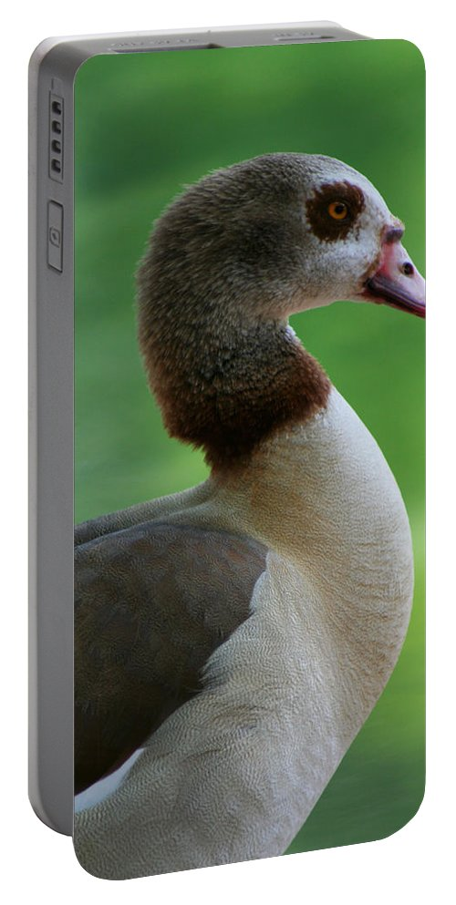 Goose Portable Battery Charger featuring the photograph Egyptian Goose by Allan Lovell