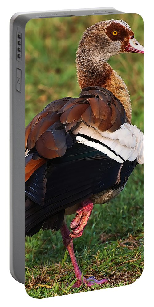 Bird Portable Battery Charger featuring the photograph Egyptian Goose by Chris Flees