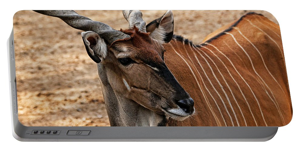 Eland Portable Battery Charger featuring the photograph Eland by Judy Vincent