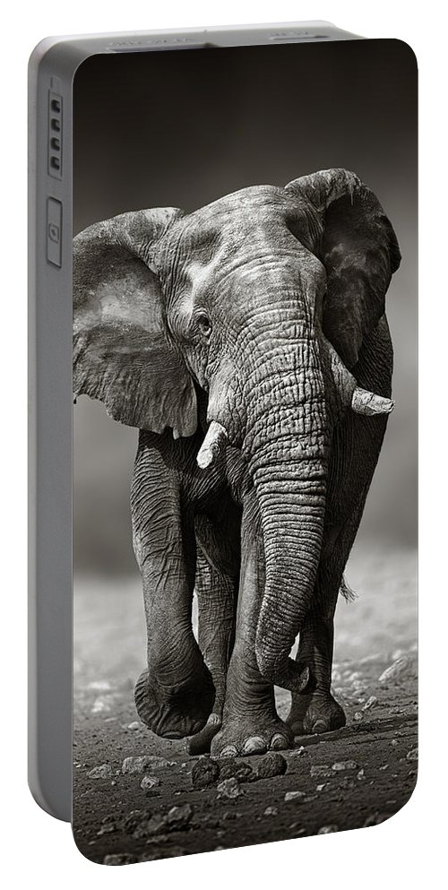Elephant Portable Battery Charger featuring the photograph Elephant approach from the front by Johan Swanepoel