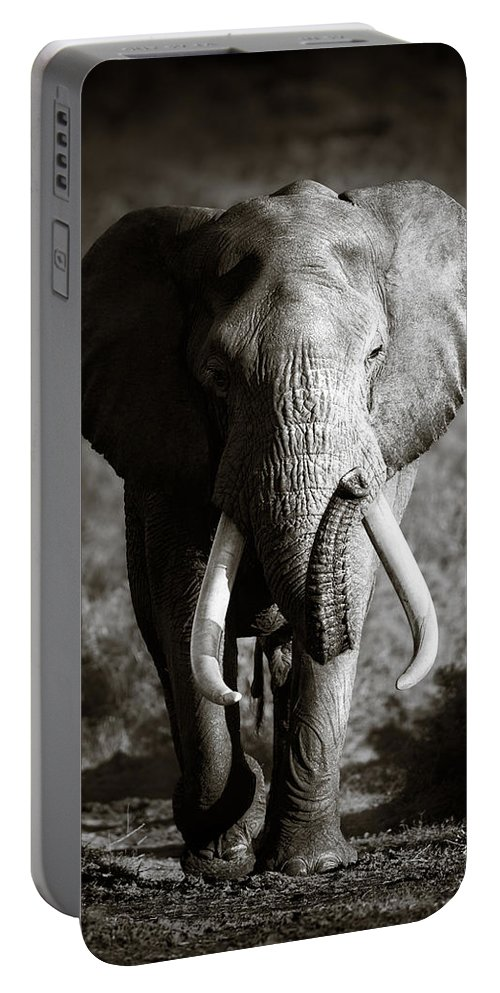 Elephant Portable Battery Charger featuring the photograph Elephant Bull by Johan Swanepoel