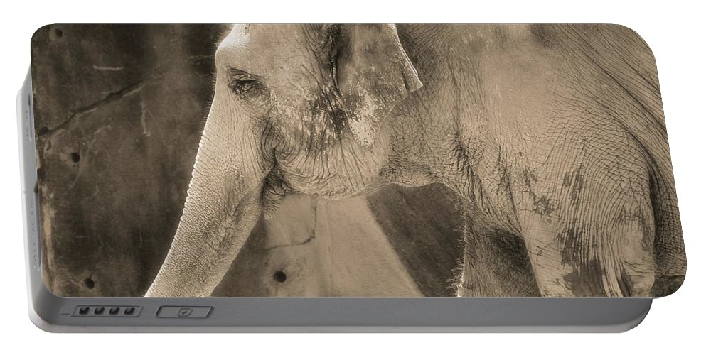 Asian Elephant Portable Battery Charger featuring the photograph Elephant Portrait by Dan Sproul