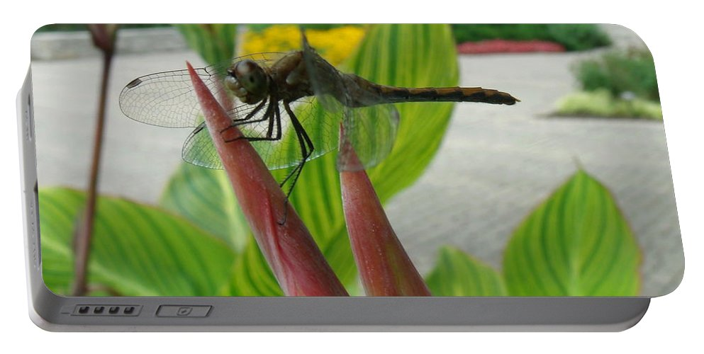 Dragonfly Portable Battery Charger featuring the photograph Elmo by Erin Rednour