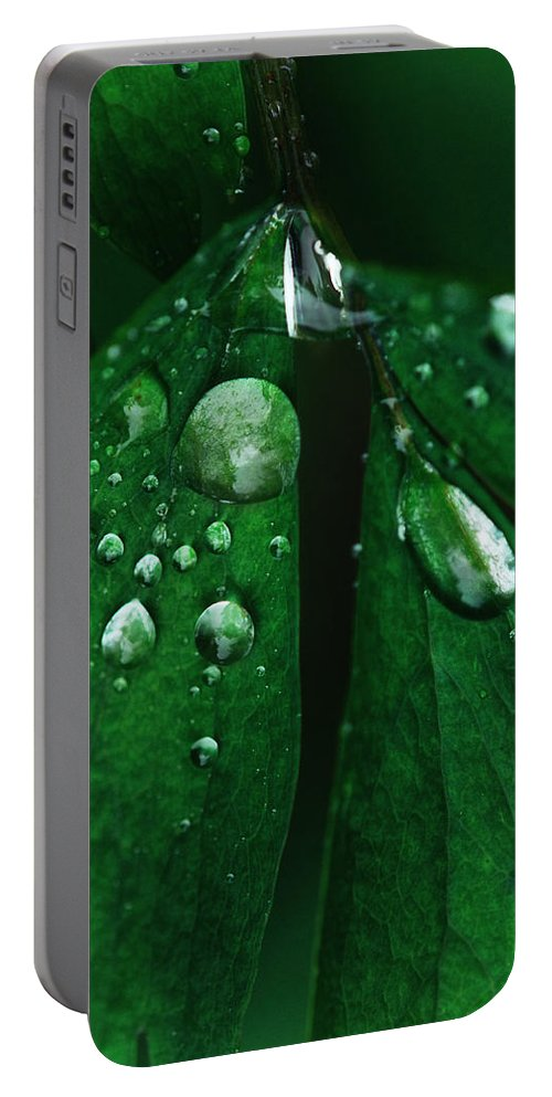 Rain Drop Portable Battery Charger featuring the photograph Emerald Rain by Susan Capuano
