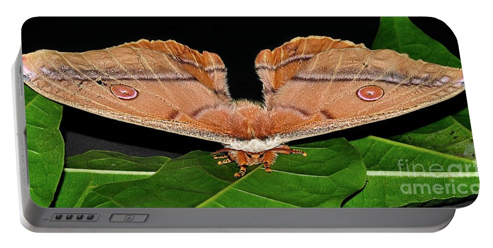 Photography Portable Battery Charger featuring the photograph Emperor Gum Moth - 6 Inch Wing Span by Kaye Menner