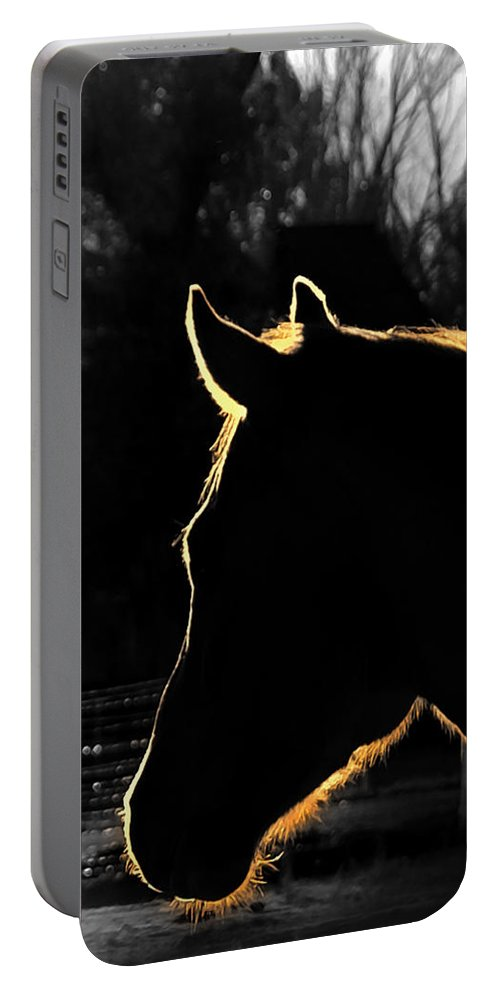Horses Portable Battery Charger featuring the photograph Equine Glow by Steven Milner