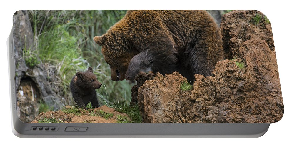 Mother Portable Battery Charger featuring the photograph Eurasian Brown Bear 13 by Arterra Picture Library