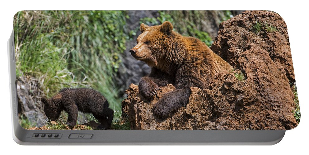 Mother Portable Battery Charger featuring the photograph Eurasian Brown Bear 8 by Arterra Picture Library