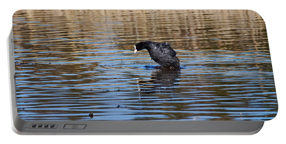 Eurasian Coot Portable Battery Charger featuring the photograph Eurasian Coot by Jouko Lehto