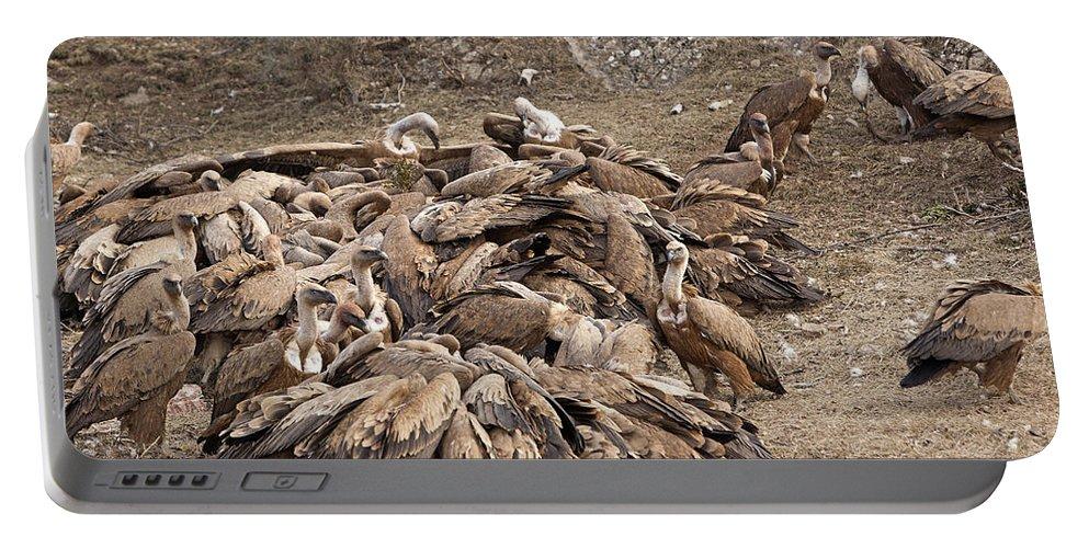 Eurasian Griffon Vulture Portable Battery Charger featuring the photograph Eurasian Griffon Vultures by M. Watson