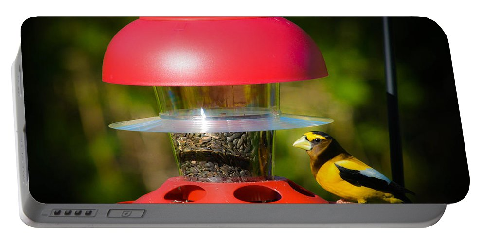 Evening Grosbeak Portable Battery Charger featuring the photograph Evening Grosbeak by Sherman Perry
