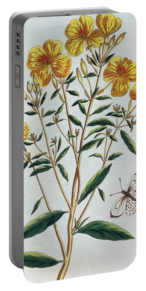 L'onagra En Arbre Portable Battery Charger featuring the painting Evening Primrose by Pierre-Joseph Buchoz