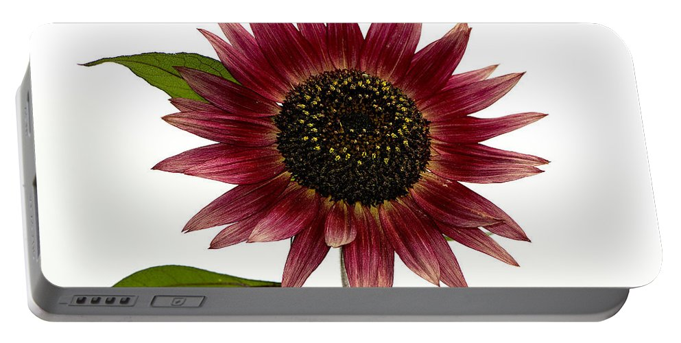 Evening Sun Sunflower Portable Battery Charger featuring the photograph Evening Sun Sunflower 2 by Sharon Talson