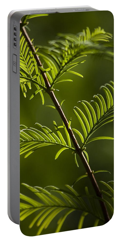 Natures Green Portable Battery Charger featuring the photograph Ever Green by Karol Livote
