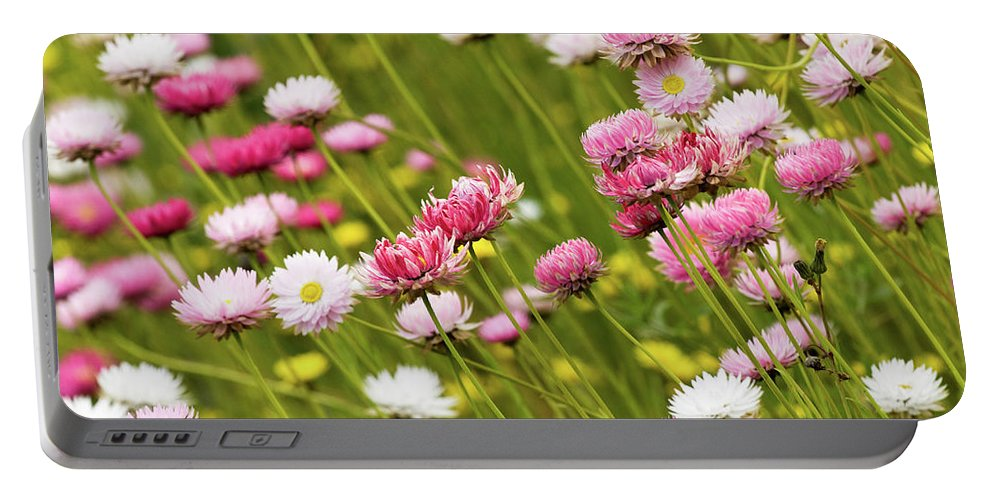 Everlastings Portable Battery Charger featuring the photograph Everlastings by Rick Piper Photography