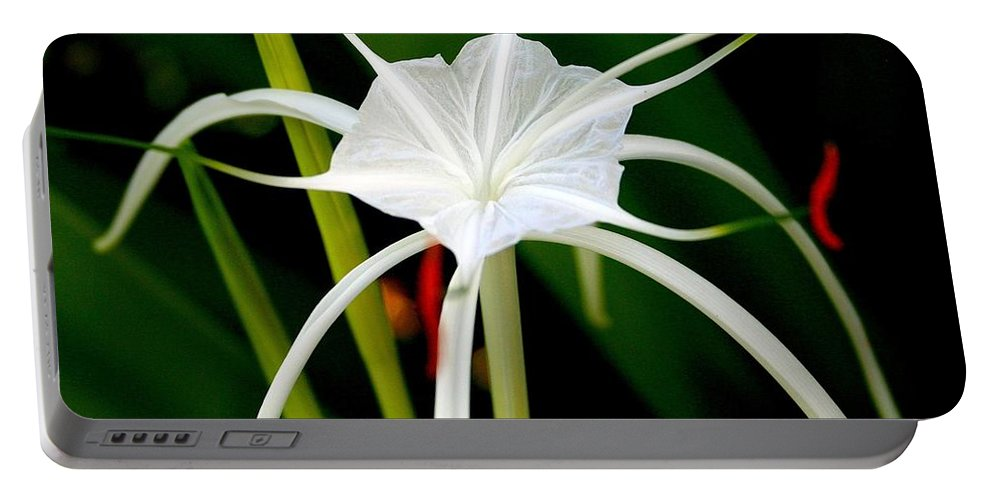 Spider Lily Portable Battery Charger featuring the photograph Exquisite Spider Lily by Laurel Talabere