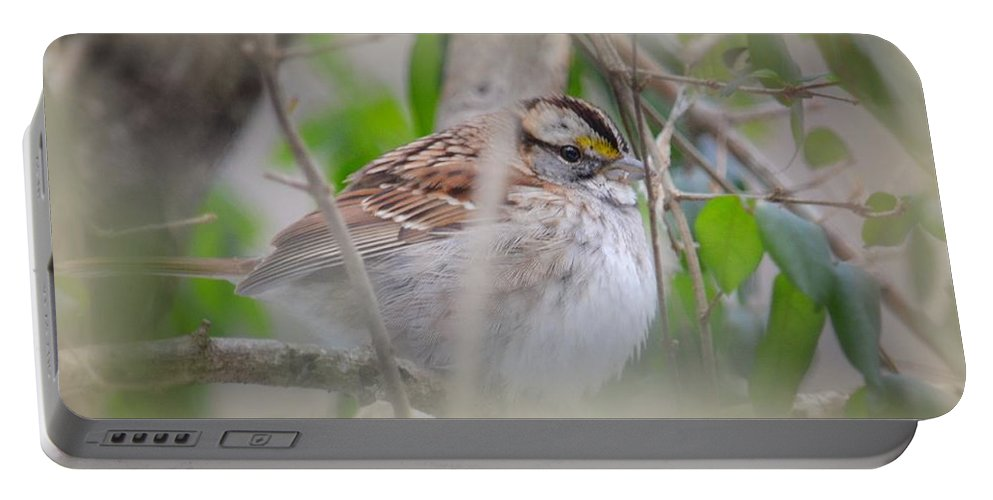 Eye On The Sparrow Portable Battery Charger featuring the photograph Eye On The Sparrow by Maria Urso