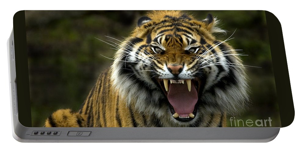 Tiger Portable Battery Charger featuring the photograph Eyes of the Tiger by Mike Dawson
