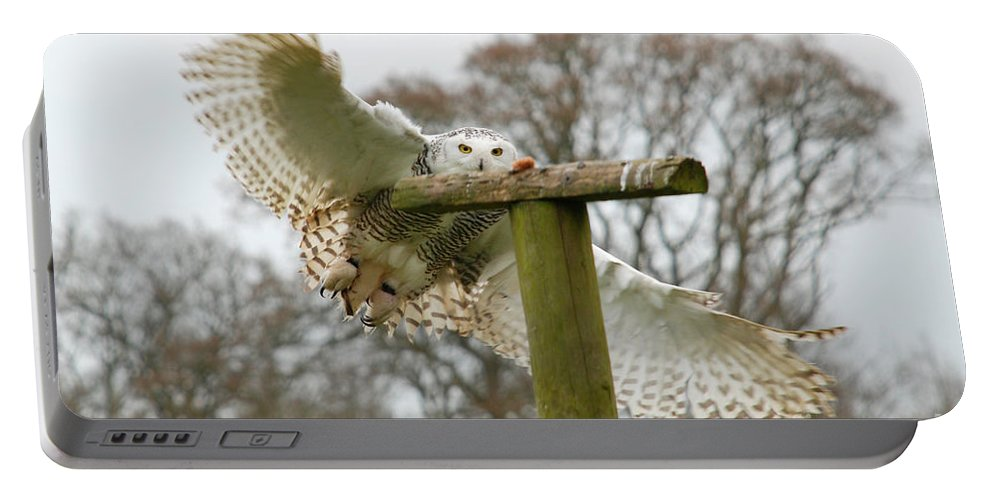 Snowy Owl Swooping Cotswold Falconry Centre Perch Focus Portable Battery Charger featuring the photograph Eyes On The Prize by Richard Gibb