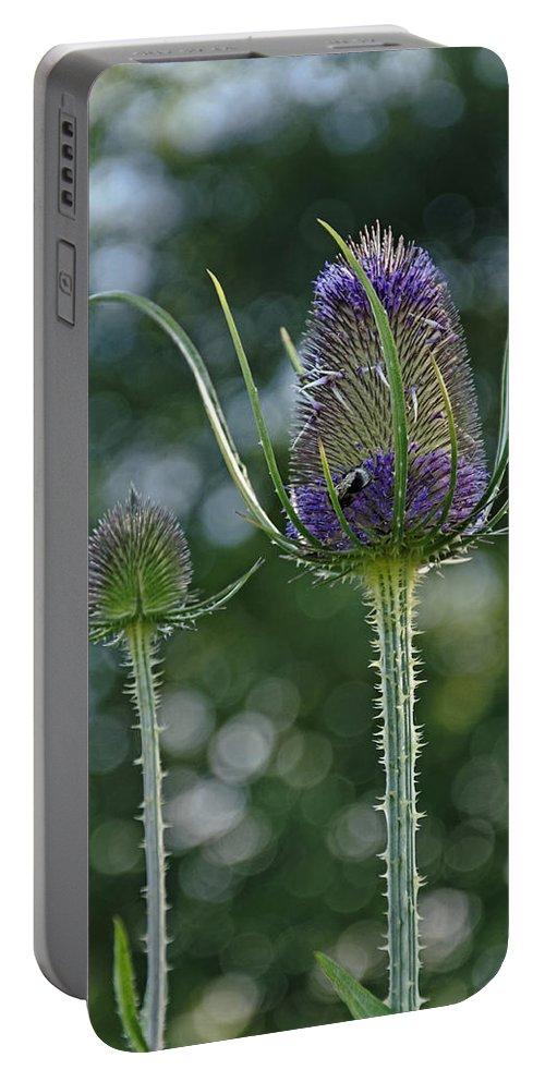 Derbyshire Portable Battery Charger featuring the photograph Fading Teasel Flower by Rod Johnson