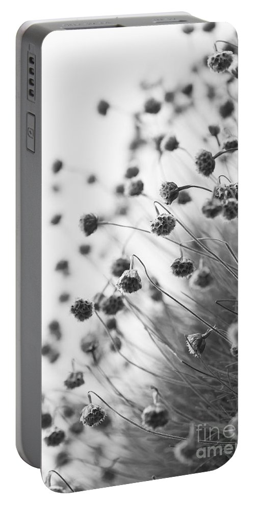 Abstract Portable Battery Charger featuring the photograph Fading Thrift by Anne Gilbert
