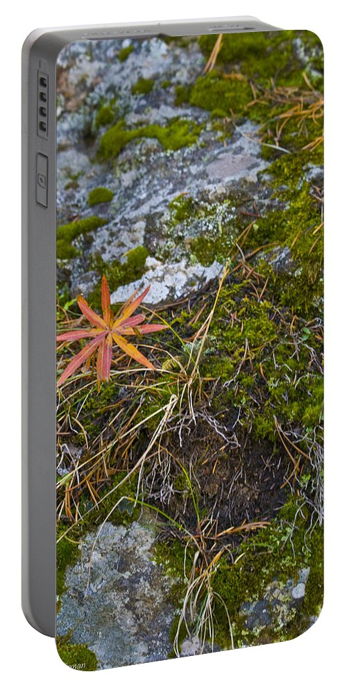Scenic Portable Battery Charger featuring the photograph Fall And Moss by Crystal Heitzman Renskers