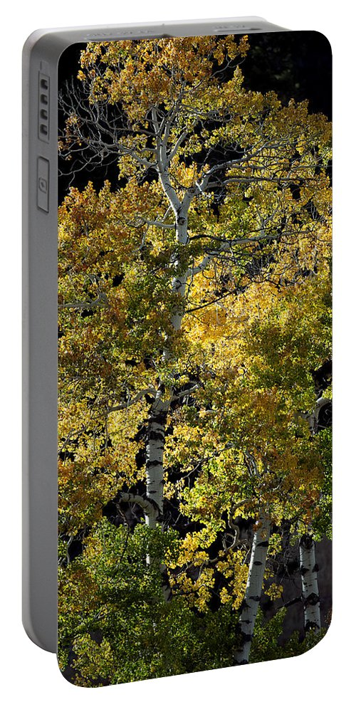 Fall Portable Battery Charger featuring the photograph Fall Aspen by Gary Langley