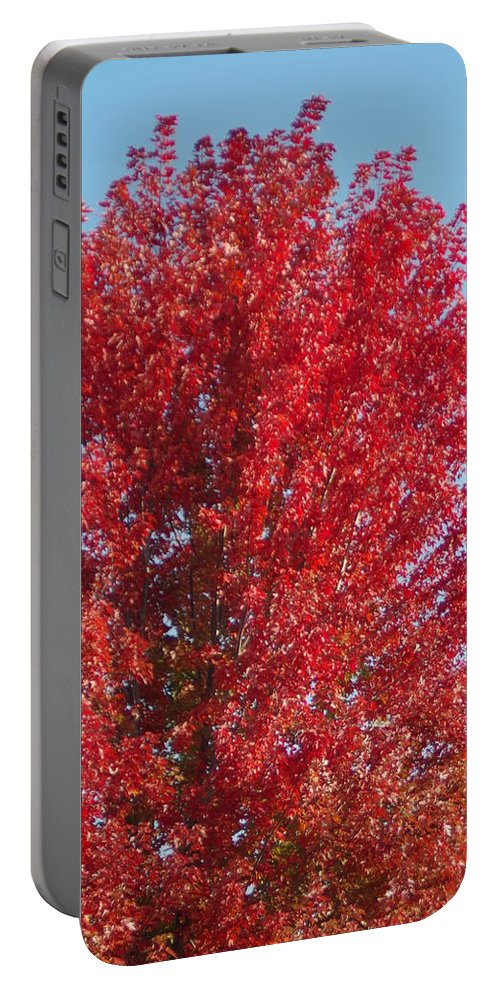 Fall Colors Portable Battery Charger featuring the photograph Fall Colors by Mike Wheeler