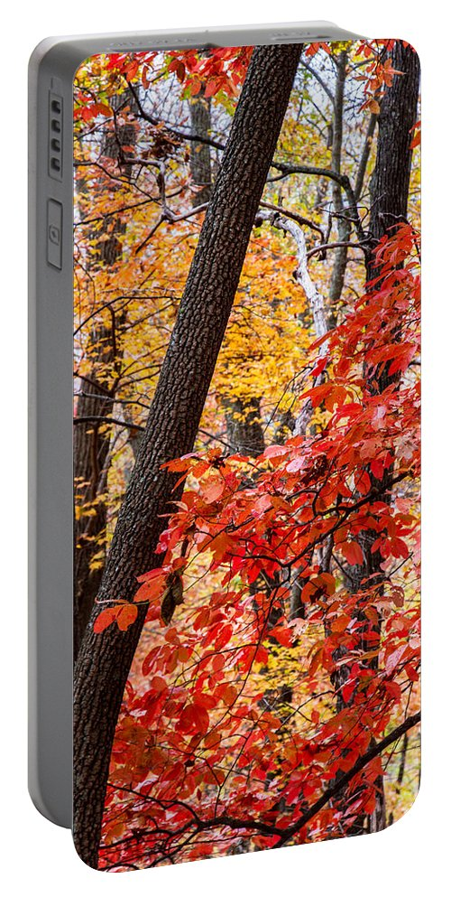 Nc Portable Battery Charger featuring the photograph Fall In The Forest by John Haldane