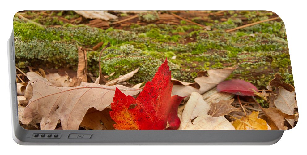 Fall Portable Battery Charger featuring the photograph Fall Moss Carpet by Douglas Barnett