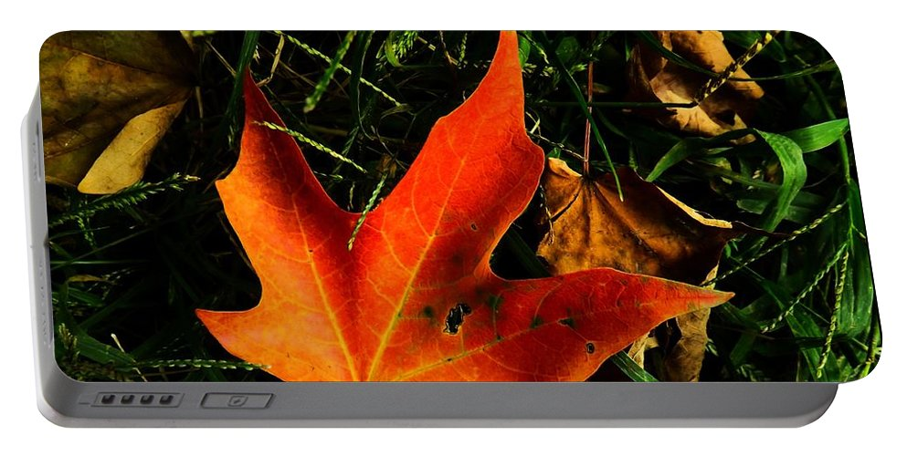 Autumn Portable Battery Charger featuring the photograph Fallen Leaves by Robyn King