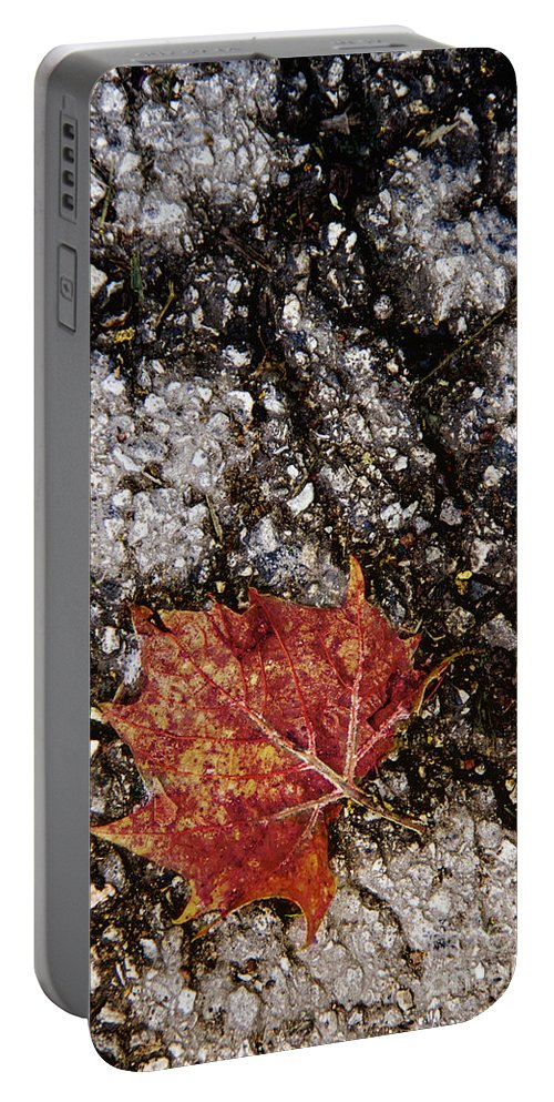 Leaf Portable Battery Charger featuring the photograph Fallen One by Margie Hurwich