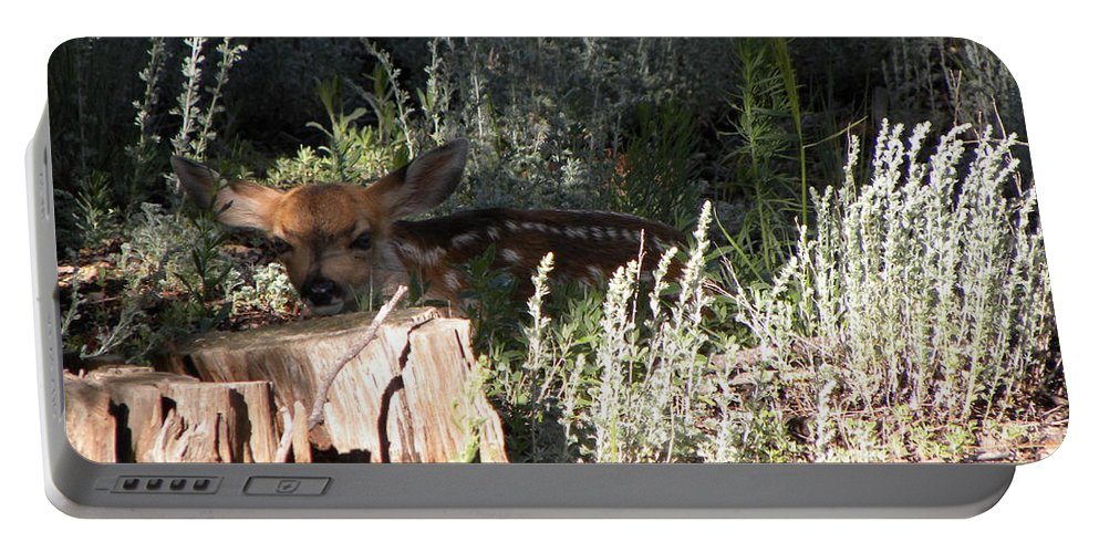 Animal Portable Battery Charger featuring the photograph Fawn Front Yard Divide Co by Margarethe Binkley