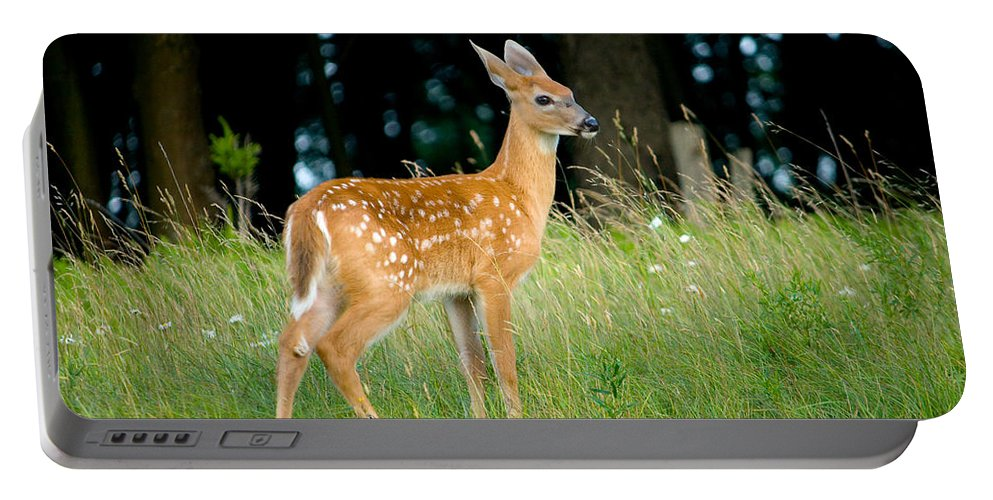 Fawn Portable Battery Charger featuring the photograph Fawn by Shane Holsclaw