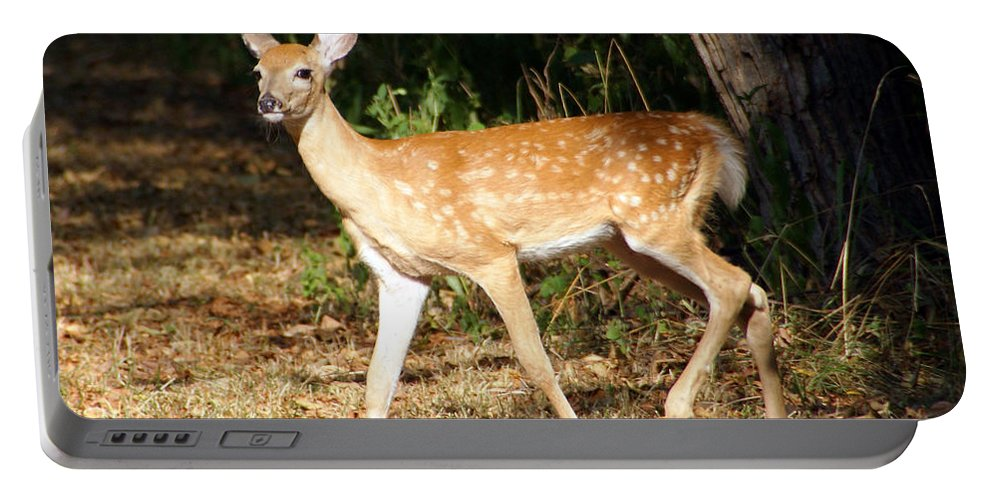 Deer Photographs Portable Battery Charger featuring the photograph Fawn by Vernis Maxwell