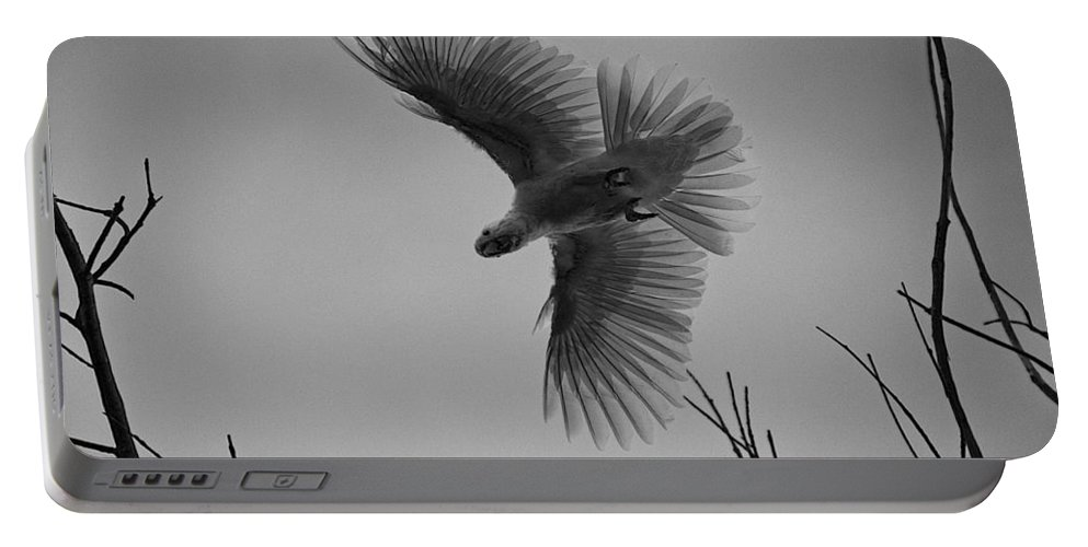 Feathers Portable Battery Charger featuring the photograph Feathered Flight by Douglas Barnard
