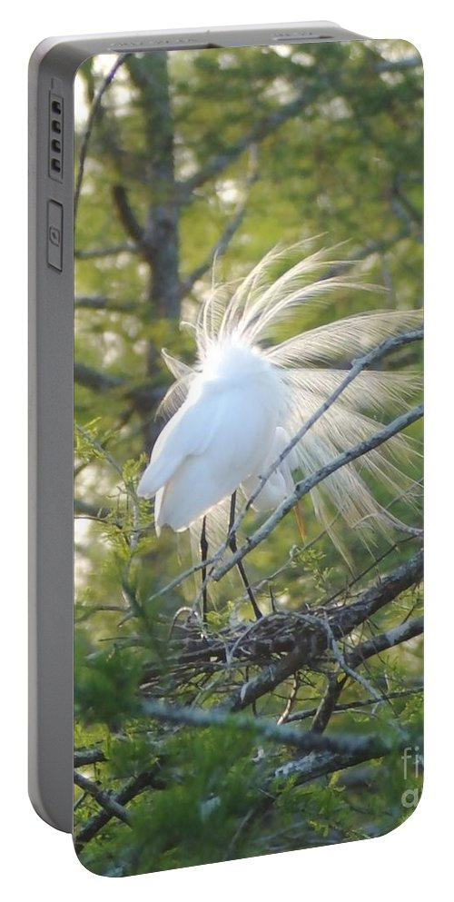 Egret Portable Battery Charger featuring the photograph Feathered by Lizi Beard-Ward