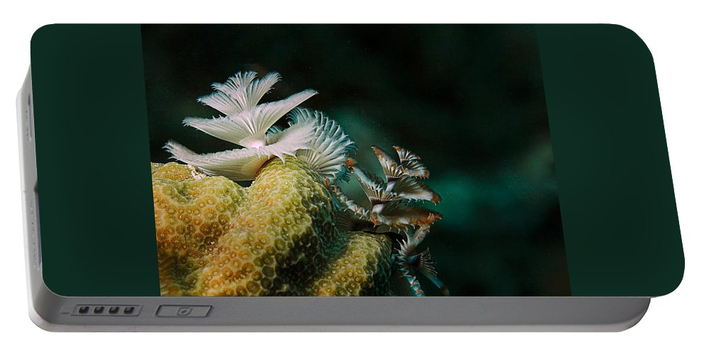 Underwater Portable Battery Charger featuring the photograph Feeding Worms by Jean Noren